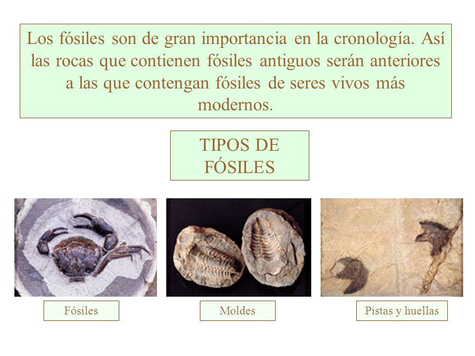 Los fósiles son de gran importancia en la cronología.