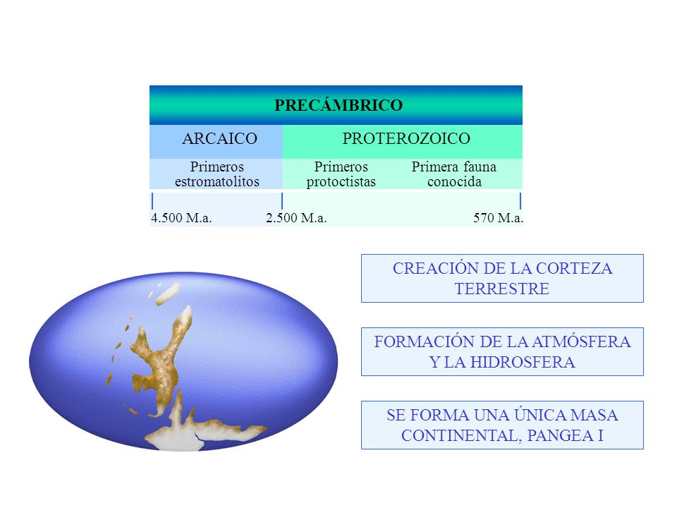 PRECÁMBRICO PROTEROZOICOARCAICO Primeros estromatolitos Primeros protoctistas Primera fauna conocida 4.500 M.a.570 M.a.2.500 M.a.