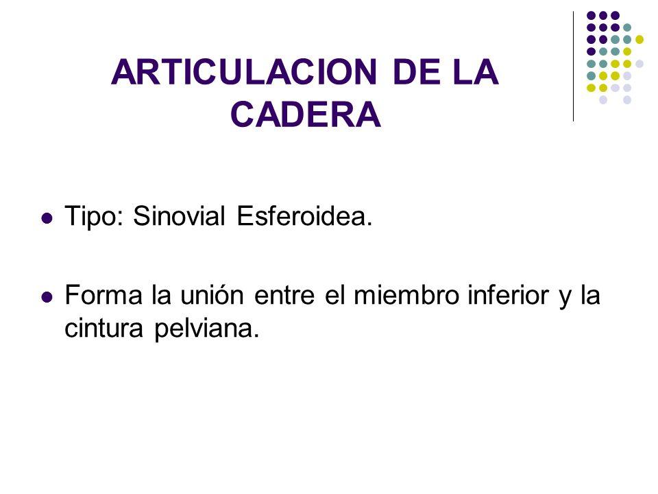 ARTICULACION DE LA CADERA Tipo: Sinovial Esferoidea. Forma la unión entre el miembro inferior y la cintura pelviana.