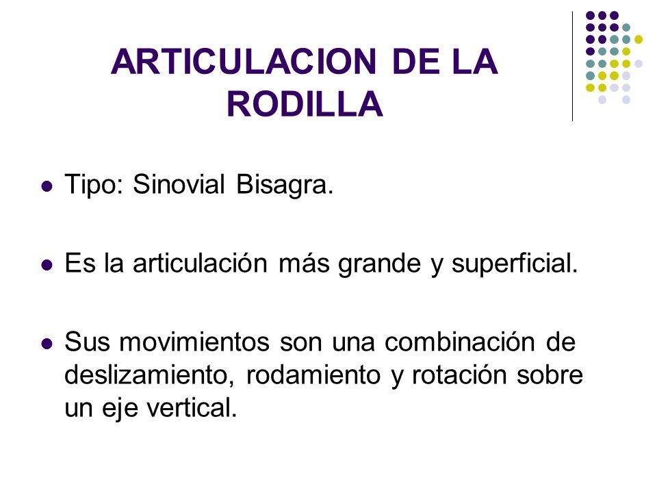 ARTICULACION DE LA RODILLA Tipo: Sinovial Bisagra. Es la articulación más grande y superficial. Sus movimientos son una combinación de deslizamiento,