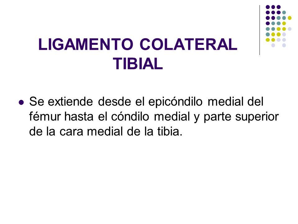 LIGAMENTO COLATERAL TIBIAL Se extiende desde el epicóndilo medial del fémur hasta el cóndilo medial y parte superior de la cara medial de la tibia.