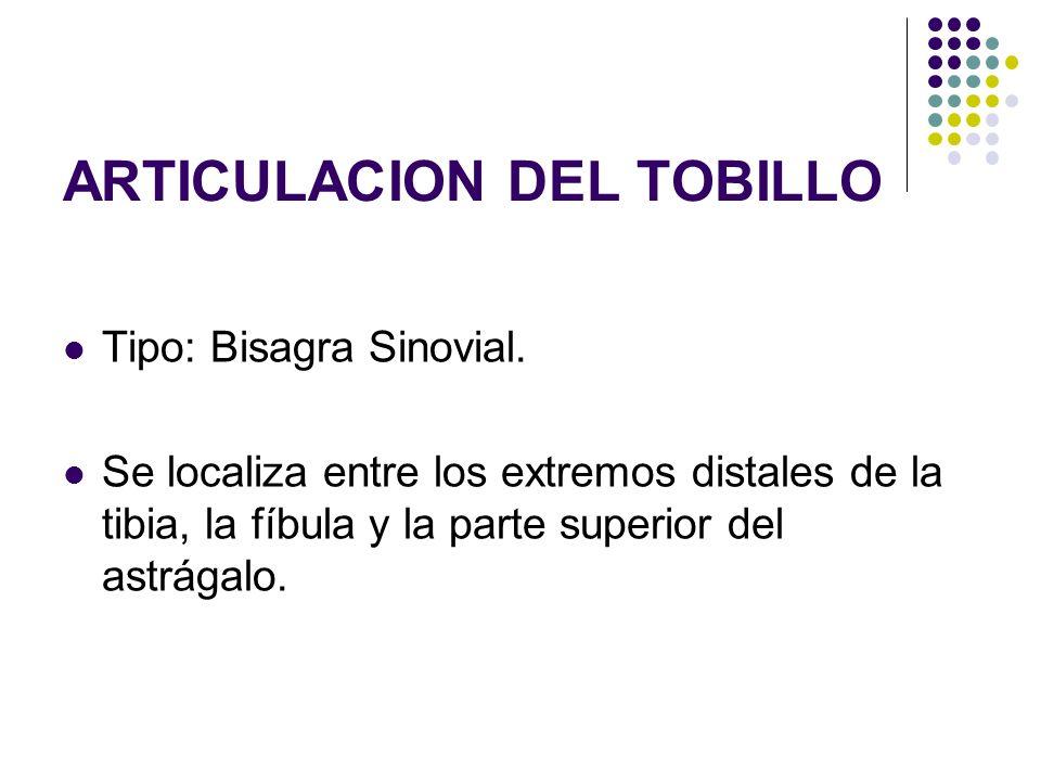 ARTICULACION DEL TOBILLO Tipo: Bisagra Sinovial. Se localiza entre los extremos distales de la tibia, la fíbula y la parte superior del astrágalo.