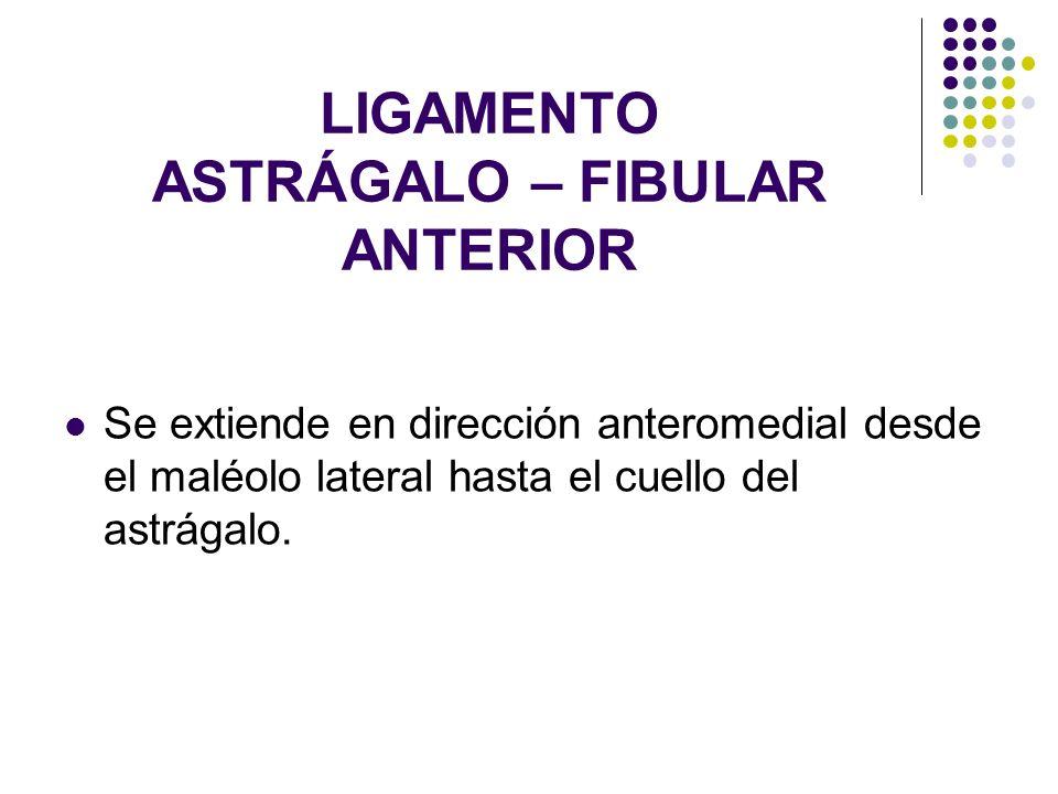 LIGAMENTO ASTRÁGALO – FIBULAR ANTERIOR Se extiende en dirección anteromedial desde el maléolo lateral hasta el cuello del astrágalo.