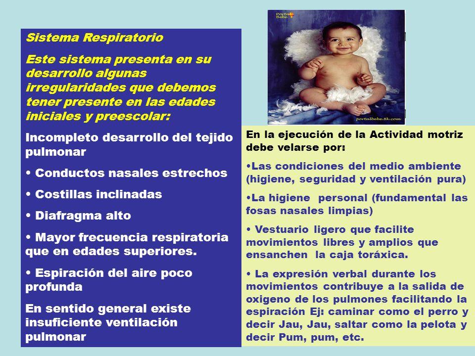 Sistema Respiratorio Este sistema presenta en su desarrollo algunas irregularidades que debemos tener presente en las edades iniciales y preescolar: I