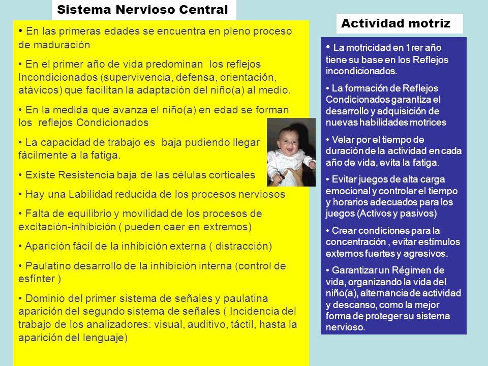 Sistema Nervioso Central En las primeras edades se encuentra en pleno proceso de maduración En el primer año de vida predominan los reflejos Incondici