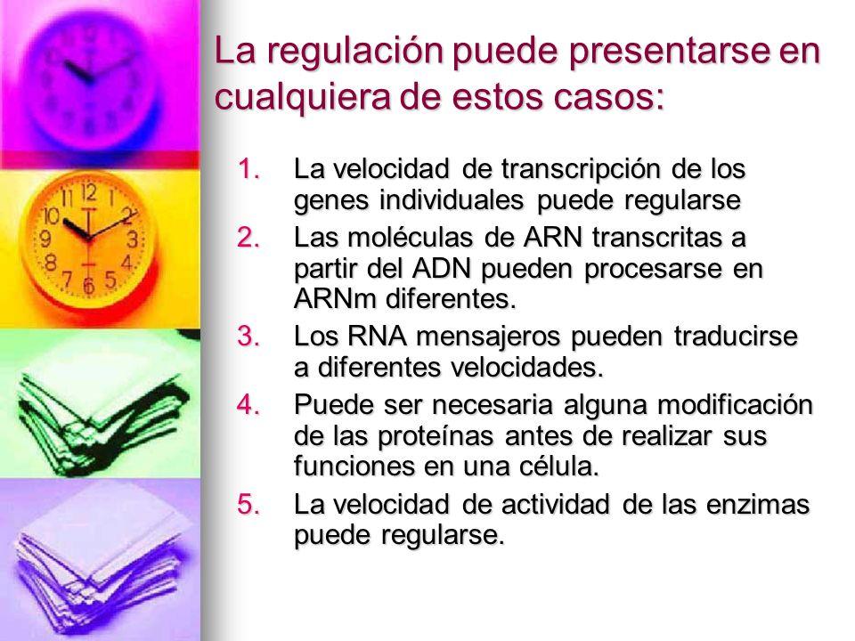 La regulación puede presentarse en cualquiera de estos casos: 1.La velocidad de transcripción de los genes individuales puede regularse 2.Las molécula