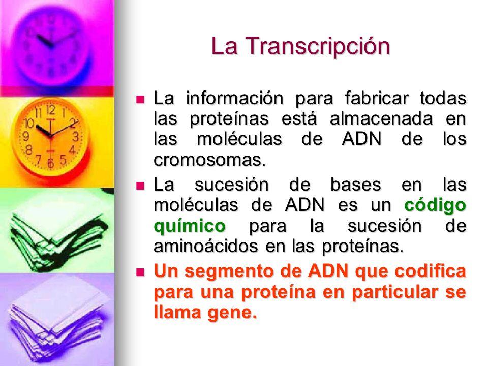 El código genético Está compuesto por palabras de tres letras.