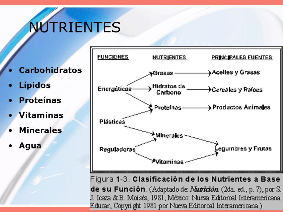 20085 NUTRIENTES Carbohidratos Lípidos Proteínas Vitaminas Minerales Agua
