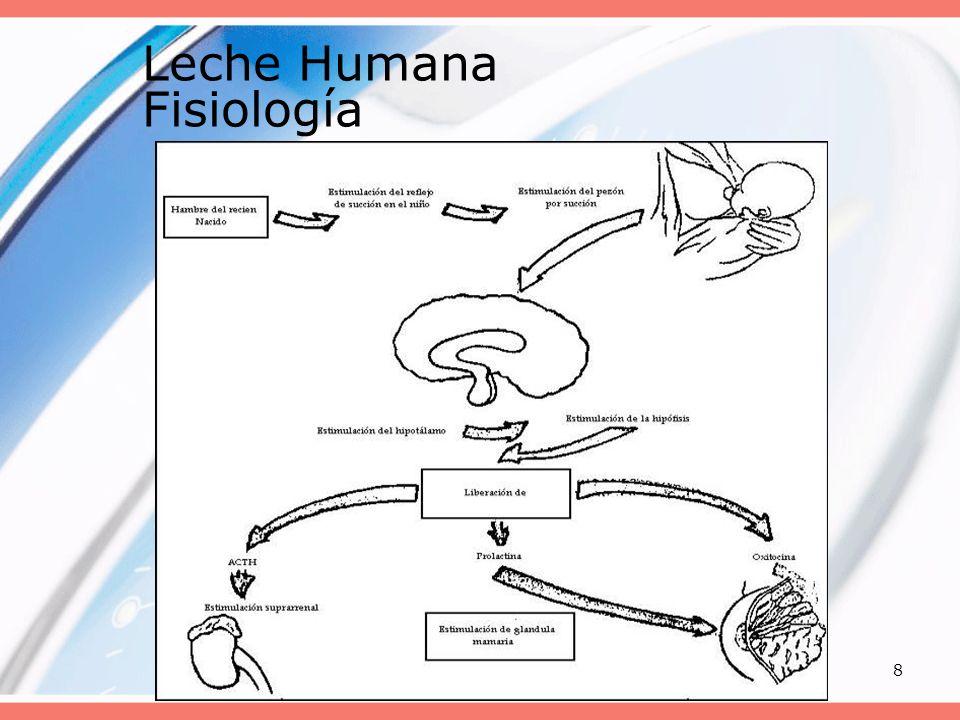 20088 Leche Humana Fisiología