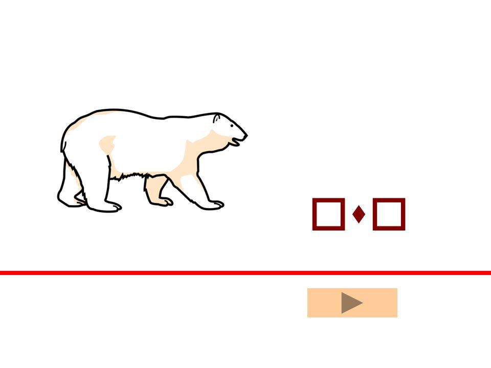 oso sala ala