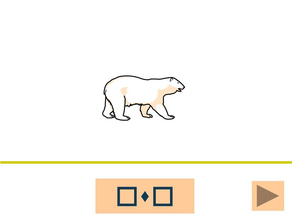 osoasoola oso