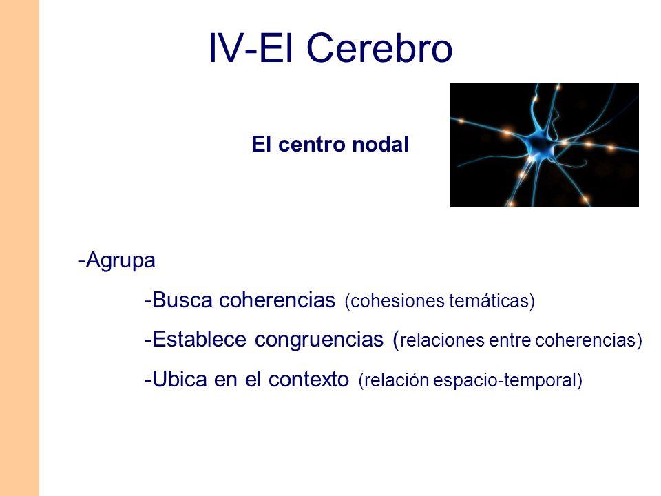 IV-El Cerebro -Agrupa -Busca coherencias (cohesiones temáticas) -Establece congruencias ( relaciones entre coherencias) -Ubica en el contexto (relació