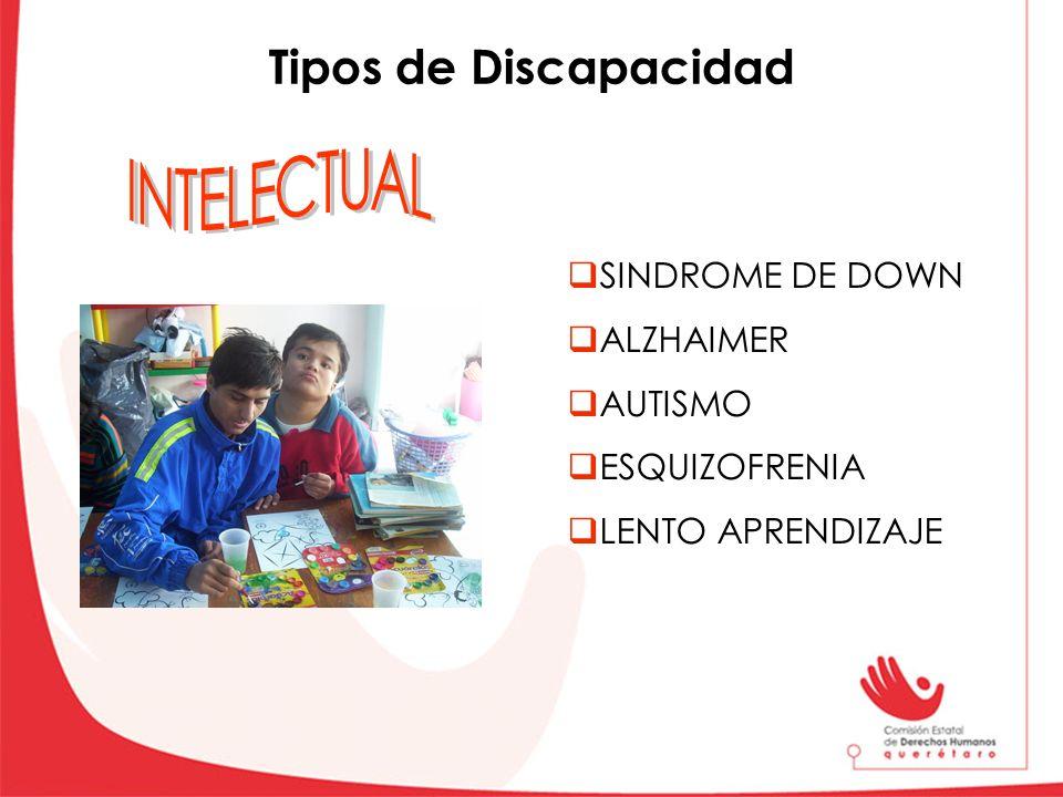 Vida Salud Educación Trabajo Derechos de las Personas con discapacidad Políticos Prestación de bienes y servicios