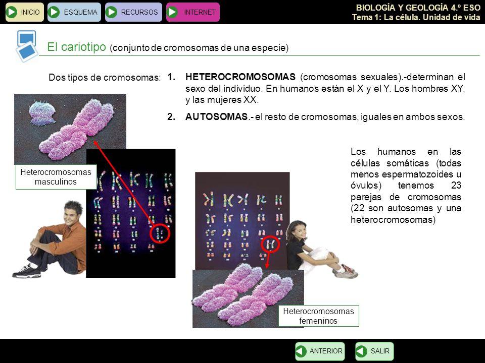 BIOLOGÍA Y GEOLOGÍA 4.º ESO Tema 1: La célula. Unidad de vida INICIOESQUEMARECURSOSINTERNET El cariotipo (conjunto de cromosomas de una especie) SALIR