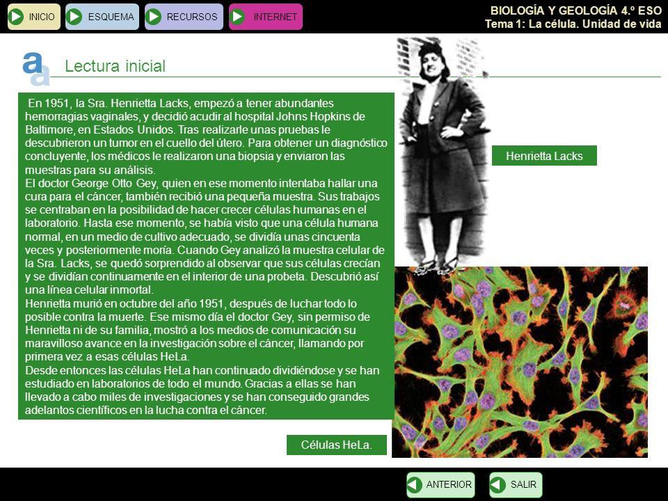 BIOLOGÍA Y GEOLOGÍA 4.º ESO Tema 1: La célula. Unidad de vida INICIOESQUEMARECURSOSINTERNET Lectura inicial En 1951, la Sra. Henrietta Lacks, empezó a
