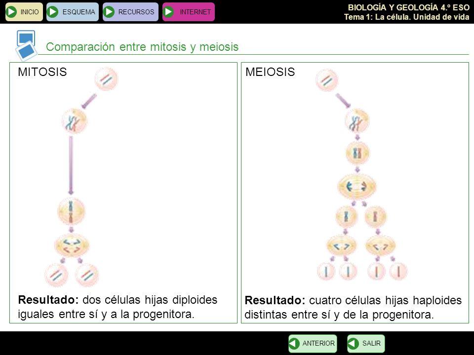 BIOLOGÍA Y GEOLOGÍA 4.º ESO Tema 1: La célula. Unidad de vida INICIOESQUEMARECURSOSINTERNET Comparación entre mitosis y meiosis SALIRANTERIOR MITOSISM