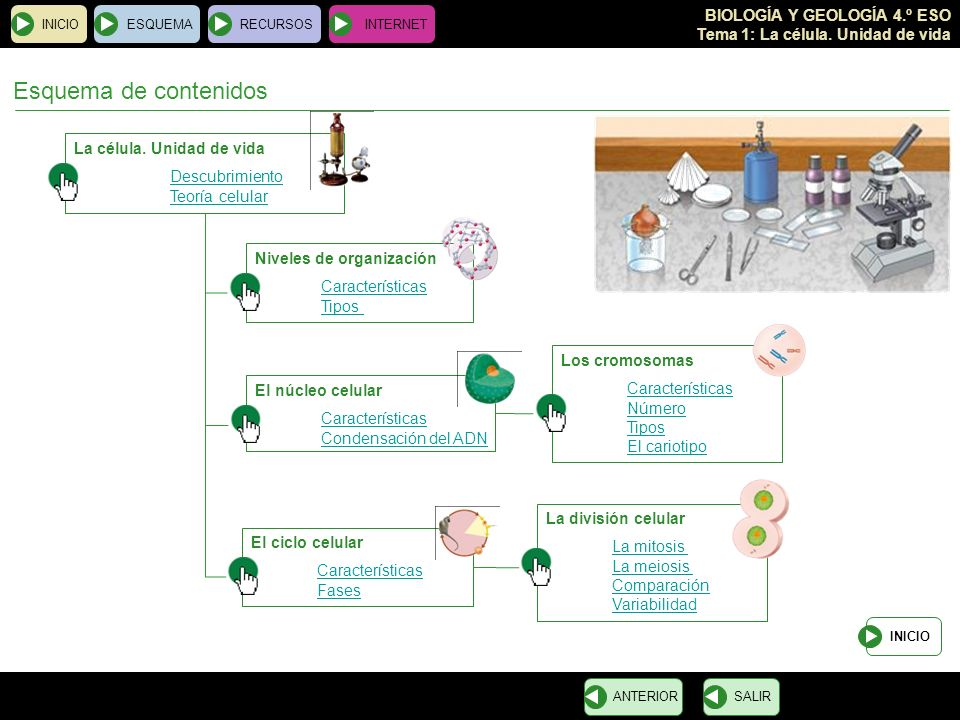 BIOLOGÍA Y GEOLOGÍA 4.º ESO Tema 1: La célula. Unidad de vida Esquema de contenidos La célula. Unidad de vida Descubrimiento Teoría celular INICIOESQU