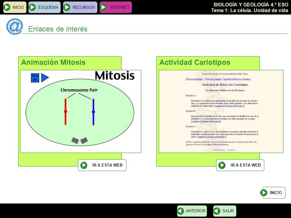 BIOLOGÍA Y GEOLOGÍA 4.º ESO Tema 1: La célula. Unidad de vida INICIOESQUEMARECURSOSINTERNET Enlaces de interés INICIO SALIRANTERIOR Animación Mitosis