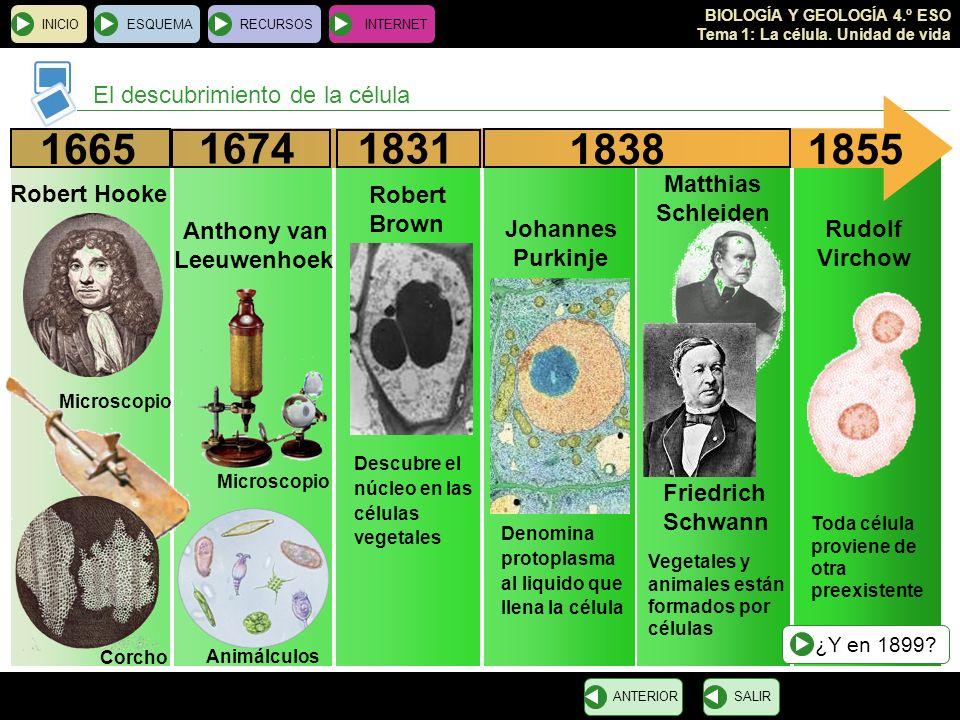 BIOLOGÍA Y GEOLOGÍA 4.º ESO Tema 1: La célula. Unidad de vida El descubrimiento de la célula INICIOESQUEMARECURSOSINTERNET SALIRANTERIOR 1665 Robert H