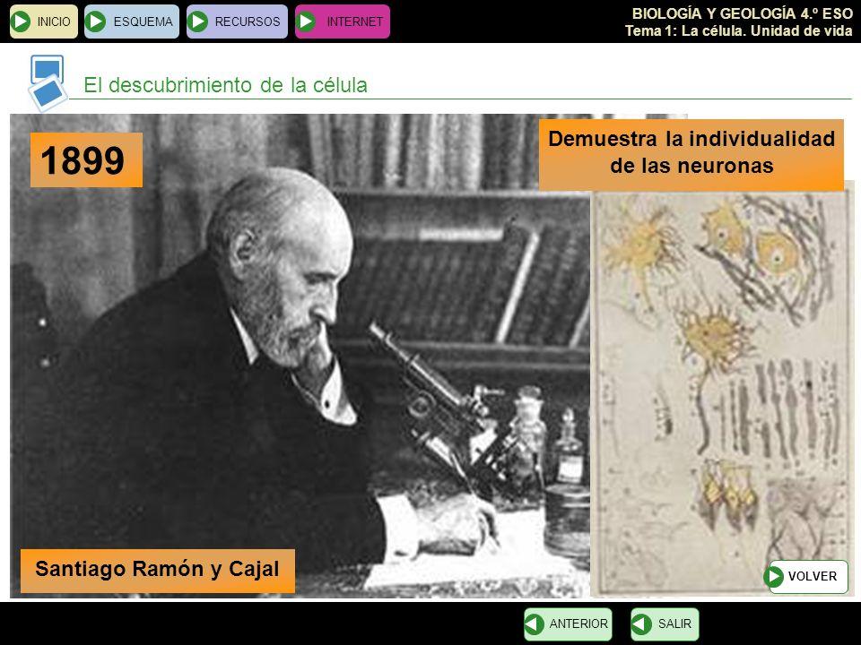 BIOLOGÍA Y GEOLOGÍA 4.º ESO Tema 1: La célula. Unidad de vida El descubrimiento de la célula INICIOESQUEMARECURSOSINTERNET SALIRANTERIOR 1899 Demuestr