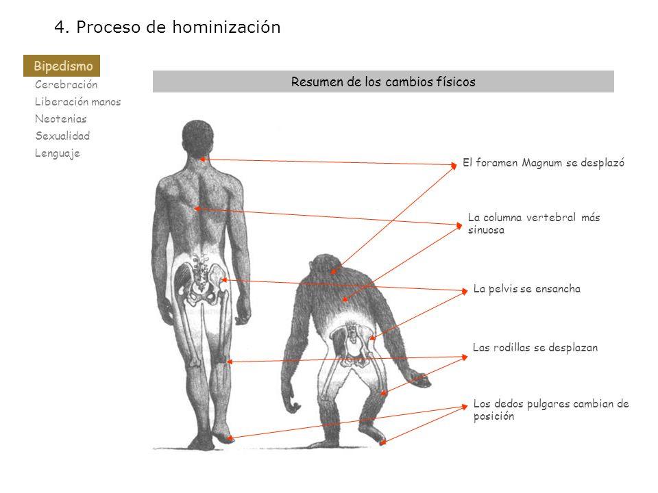 4. Proceso de hominización Resumen de los cambios físicos El foramen Magnum se desplazó La columna vertebral más sinuosa La pelvis se ensancha Las rod