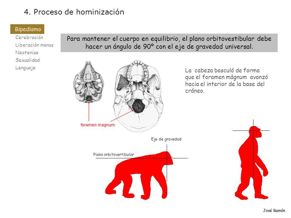 Cerebración Liberación manos Neotenias Sexualidad Lenguaje 4. Proceso de hominización Bipedismo José Ramón Para mantener el cuerpo en equilibrio, el p