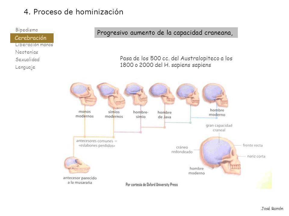 Bipedismo Cerebración Liberación manos Neotenias Sexualidad Lenguaje 4. Proceso de hominización Cerebración José Ramón Pasa de los 500 cc. del Austral