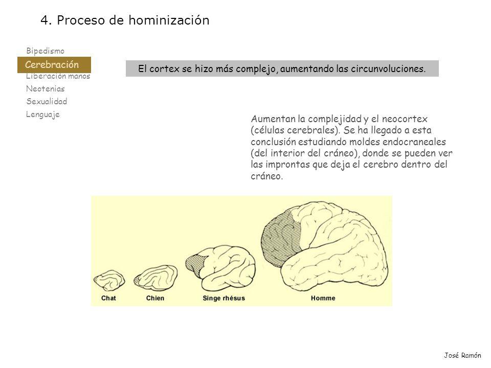 Bipedismo Cerebración Liberación manos Neotenias Sexualidad Lenguaje 4. Proceso de hominización Cerebración José Ramón El cortex se hizo más complejo,
