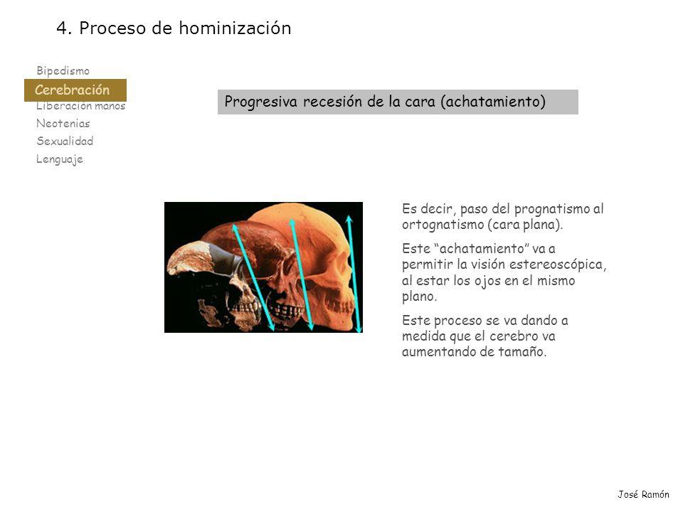 Bipedismo Cerebración Liberación manos Neotenias Sexualidad Lenguaje 4. Proceso de hominización Cerebración José Ramón Es decir, paso del prognatismo
