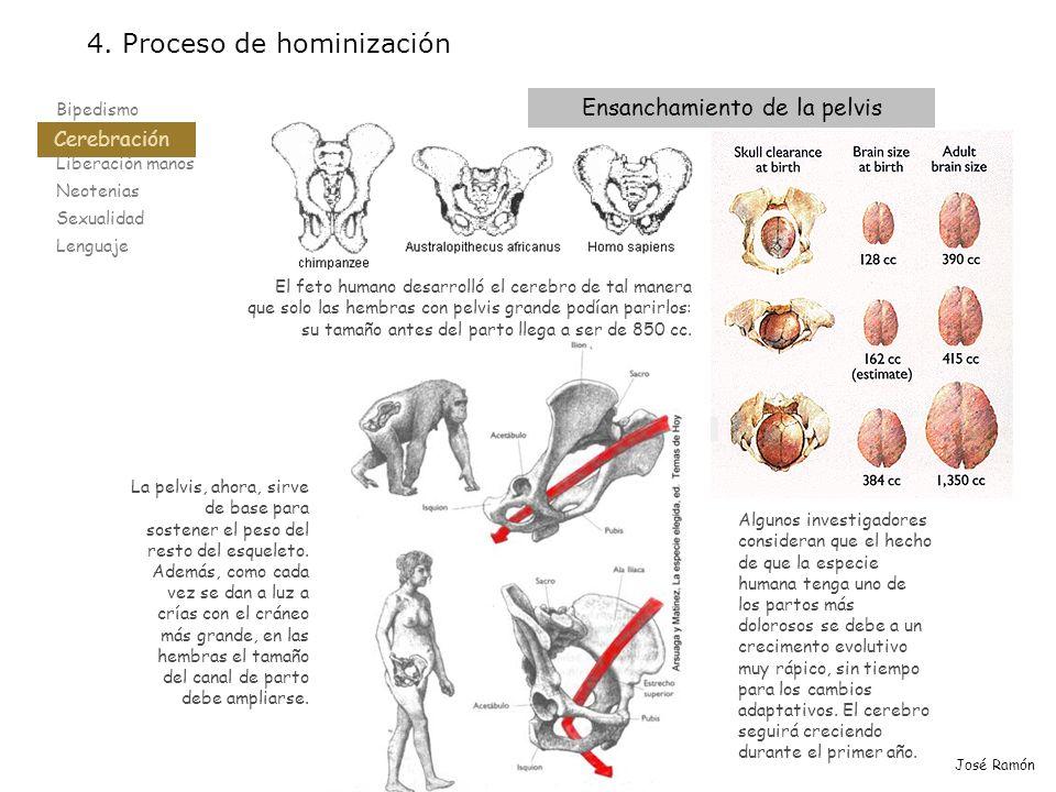 Bipedismo Cerebración Liberación manos Neotenias Sexualidad Lenguaje 4. Proceso de hominización Cerebración José Ramón El feto humano desarrolló el ce