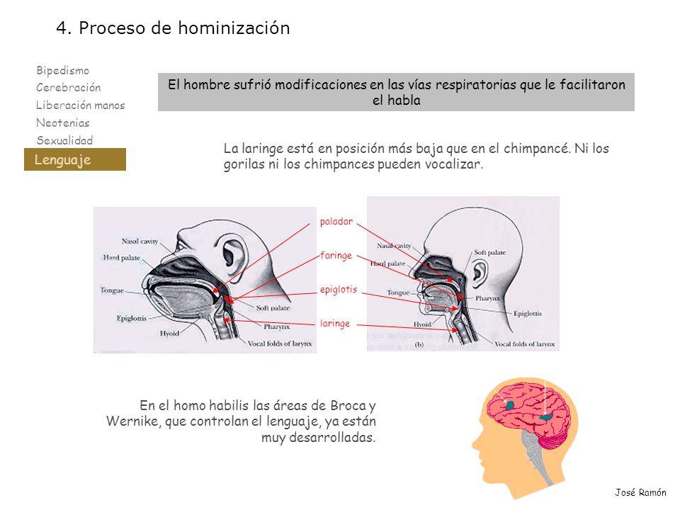 Bipedismo Cerebración Liberación manos Neotenias Sexualidad Lenguaje 4. Proceso de hominización Lenguaje José Ramón El hombre sufrió modificaciones en