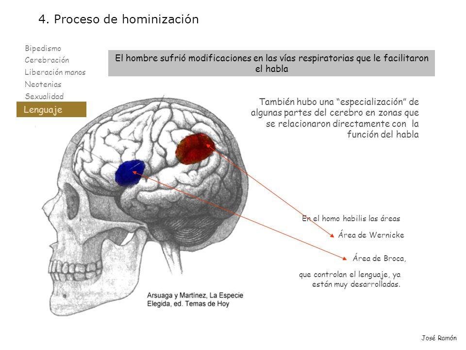 Bipedismo Cerebración Liberación manos Neotenias Sexualidad Lenguaje 4. Proceso de hominización Lenguaje José Ramón También hubo una especialización d