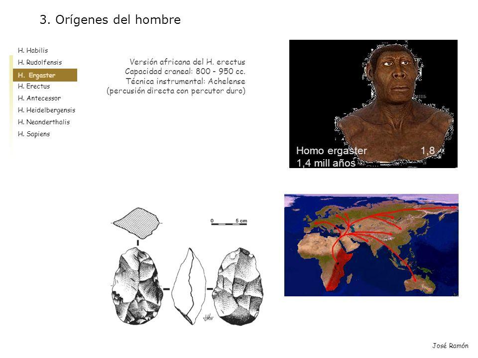 José Ramón Homo ergaster 1,8 - 1,4 mill años Versión africana del H. erectus Capacidad craneal: 800 - 950 cc. Técnica instrumental: Achelense (percusi