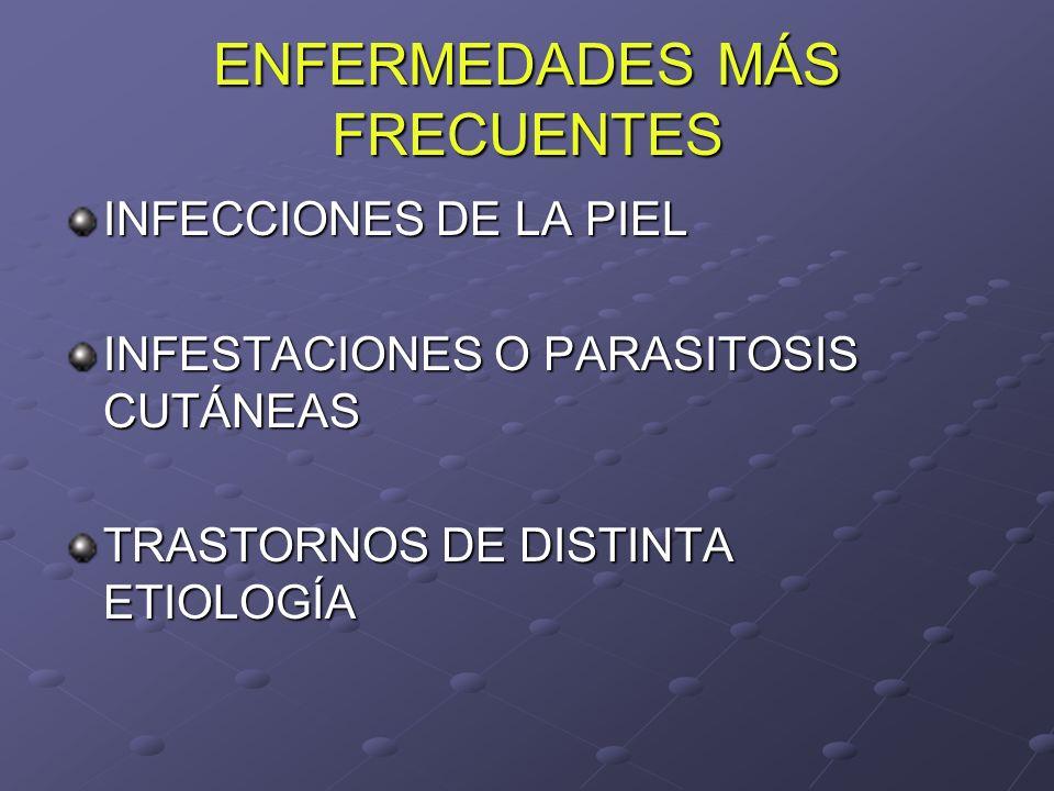 ENFERMEDADES MÁS FRECUENTES INFECCIONES DE LA PIEL INFESTACIONES O PARASITOSIS CUTÁNEAS TRASTORNOS DE DISTINTA ETIOLOGÍA