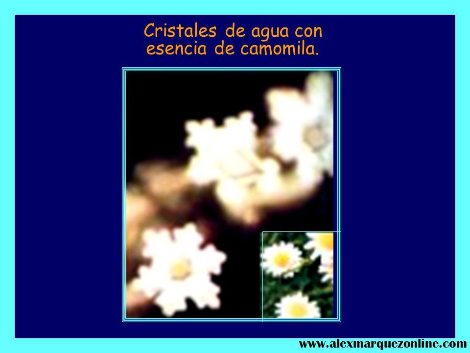 AMOR Y ADMIRACIÓN. PASTORALES DE BETHOVEN. www.alexmarquezonline.com