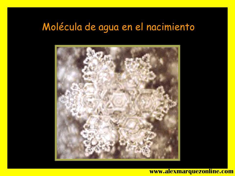 Molécula de agua en el nacimiento www.alexmarquezonline.com