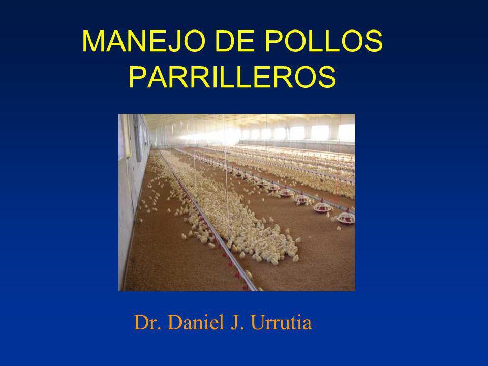 MANEJO DE POLLOS PARRILLEROS Dr. Daniel J. Urrutia
