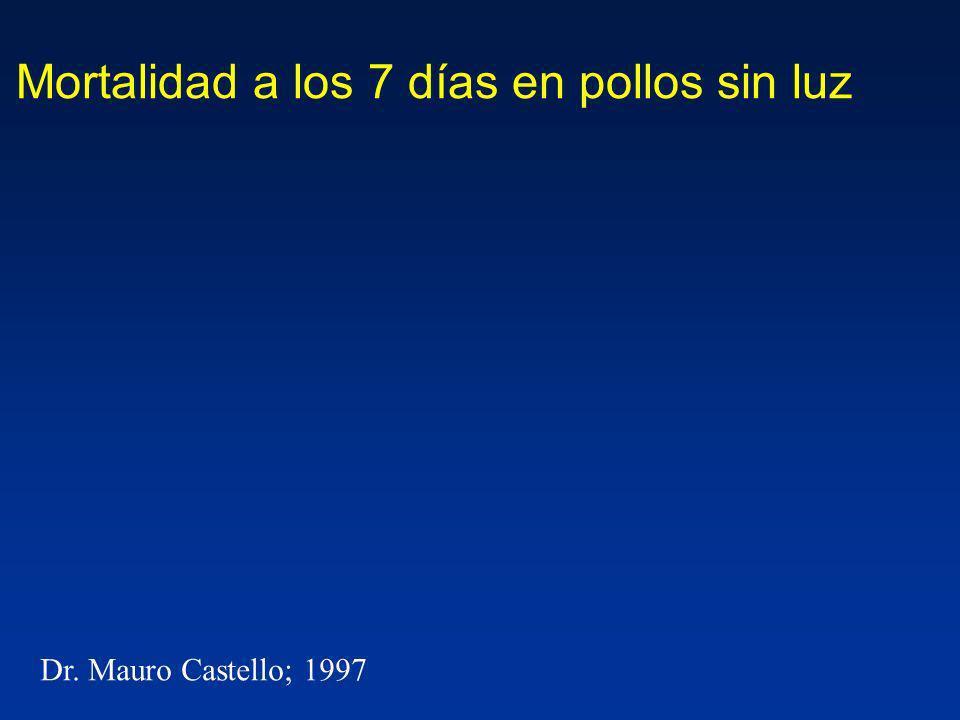 Mortalidad a los 7 días en pollos sin luz Dr. Mauro Castello; 1997
