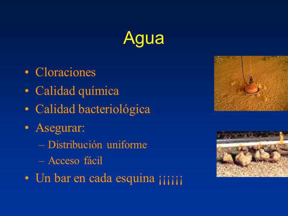 Agua Cloraciones Calidad química Calidad bacteriológica Asegurar: –Distribución uniforme –Acceso fácil Un bar en cada esquina ¡¡¡¡¡¡
