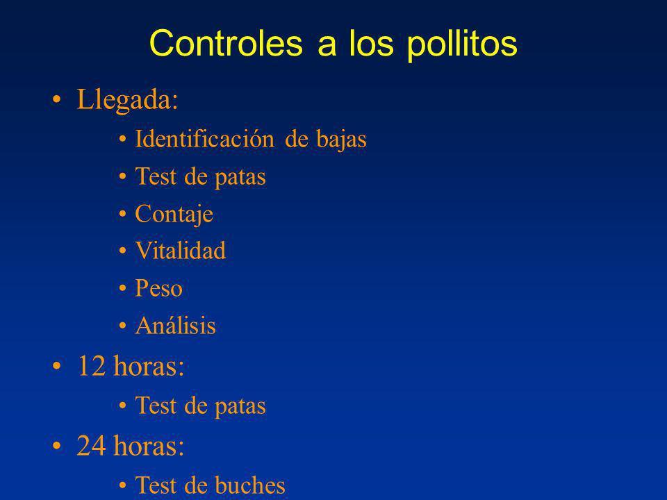 Controles a los pollitos Llegada: Identificación de bajas Test de patas Contaje Vitalidad Peso Análisis 12 horas: Test de patas 24 horas: Test de buch