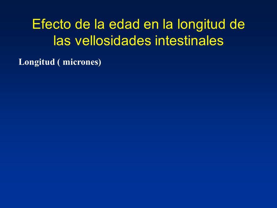 Efecto de la edad en la longitud de las vellosidades intestinales Longitud ( micrones)