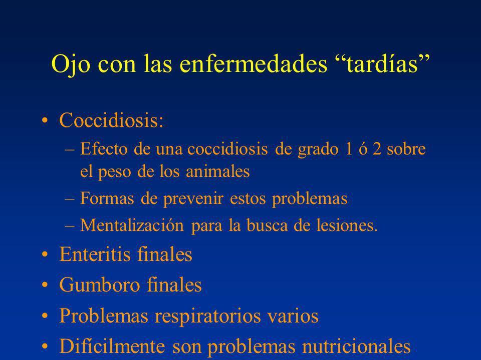 Ojo con las enfermedades tardías Coccidiosis: –Efecto de una coccidiosis de grado 1 ó 2 sobre el peso de los animales –Formas de prevenir estos proble