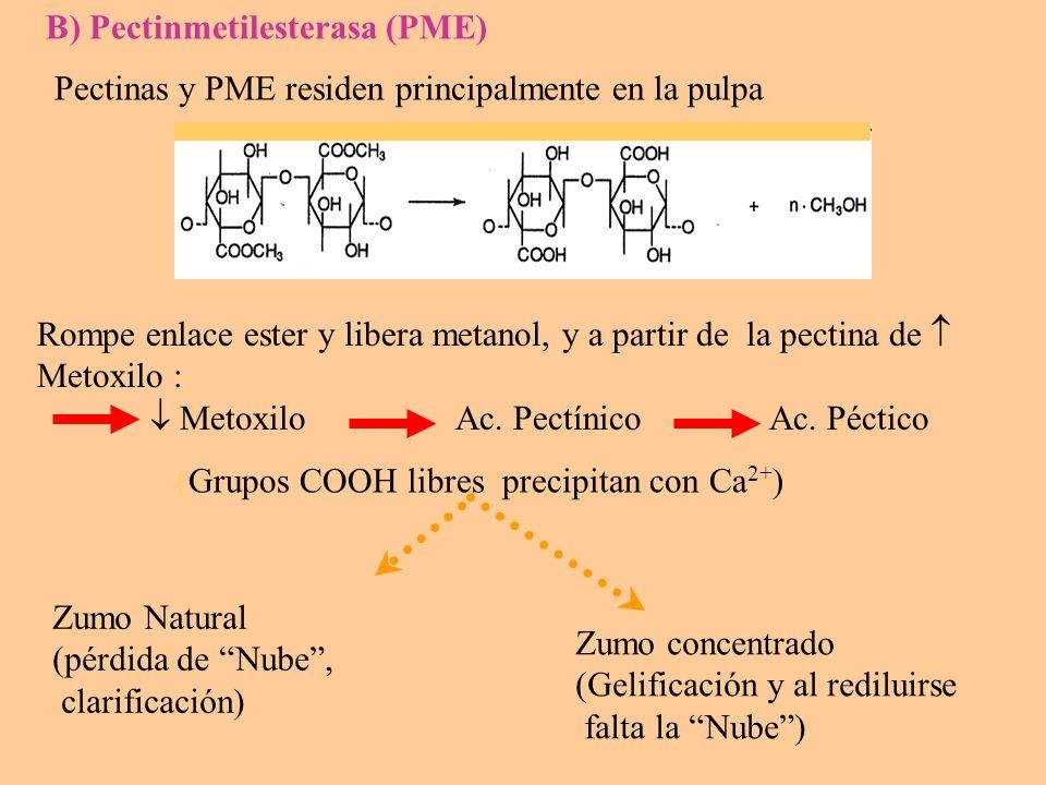 A PME : Mayor formación de: - Pectina de bajo Metoxilo - Ac.