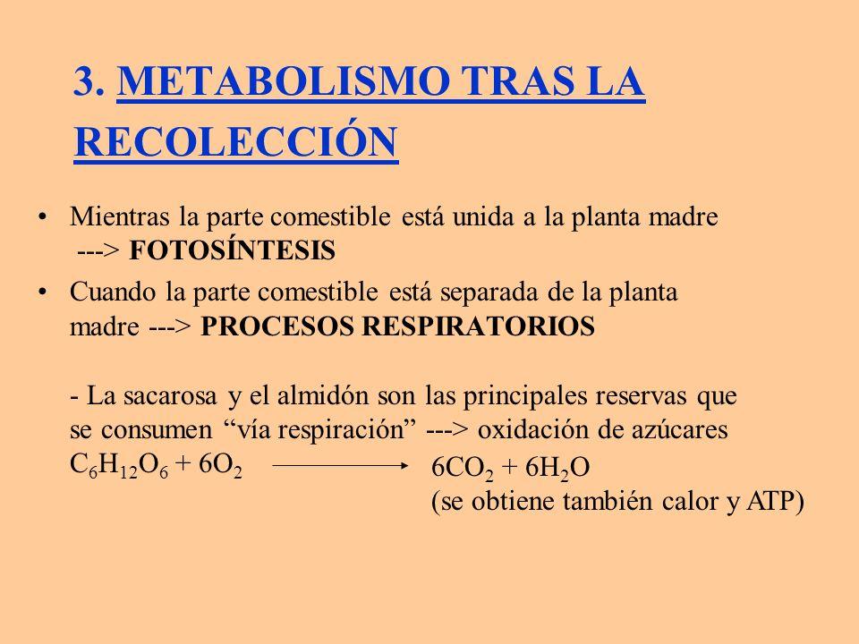 La ruta metabólica completa tiene dos vías: a) GLICOLISIS: Piruvato ---> Acetil CoA ---> C.