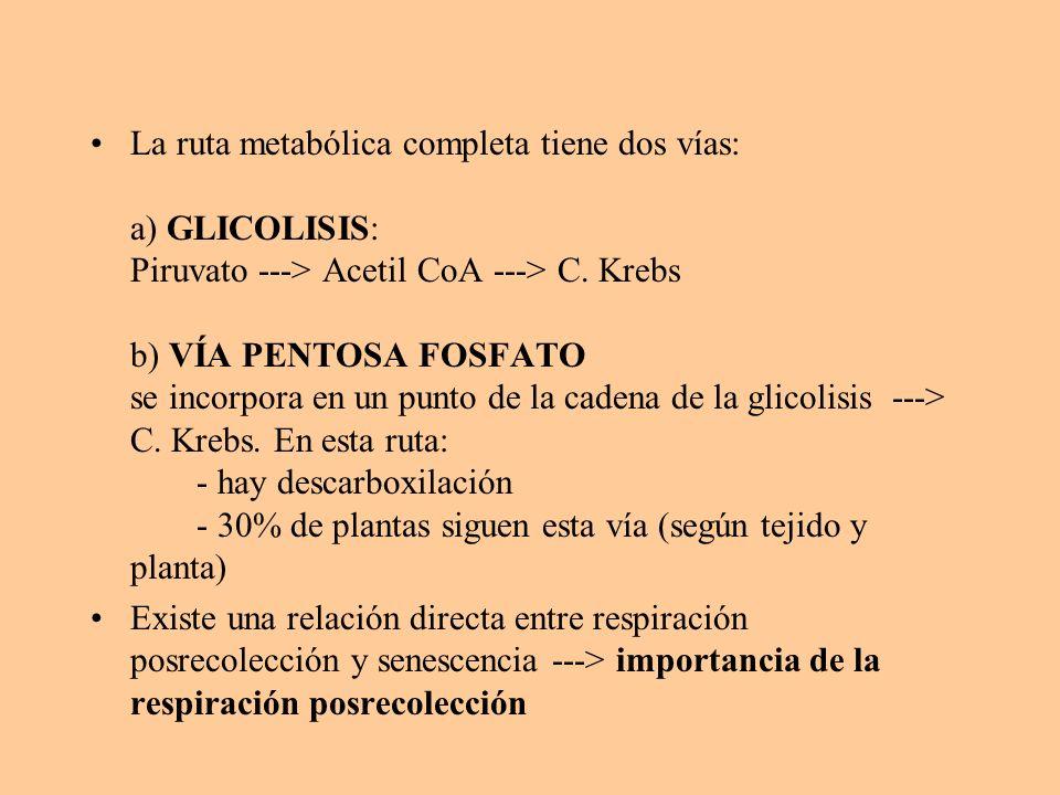 La ruta metabólica completa tiene dos vías: a) GLICOLISIS: Piruvato ---> Acetil CoA ---> C. Krebs b) VÍA PENTOSA FOSFATO se incorpora en un punto de l