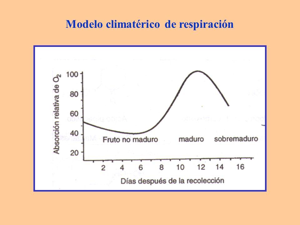 La maduración se da: - en el árbol: proceso más lento, mejor calidad - en posrecolección: aumento de rentabilidad Los cambios producidos en el climaterio afectan a : - color - textura - sabor - aroma - síntesis de ARN y de proteínas