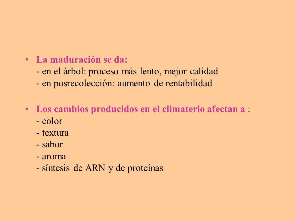 La actividad respiratoria depende de: a) temperatura: un aumento de 10ºC duplica o triplica la actividad respiratoria Este incremento se puede expresar como Q10= v reacc.