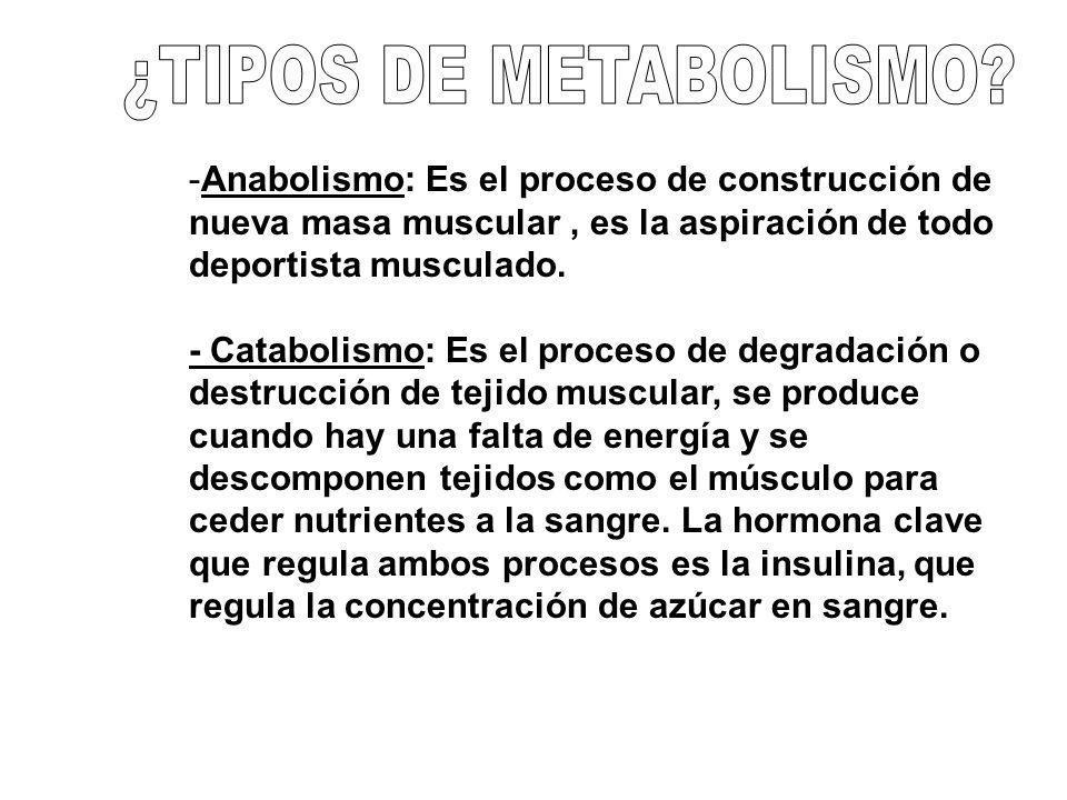 -Anabolismo: Es el proceso de construcción de nueva masa muscular, es la aspiración de todo deportista musculado. - Catabolismo: Es el proceso de degr