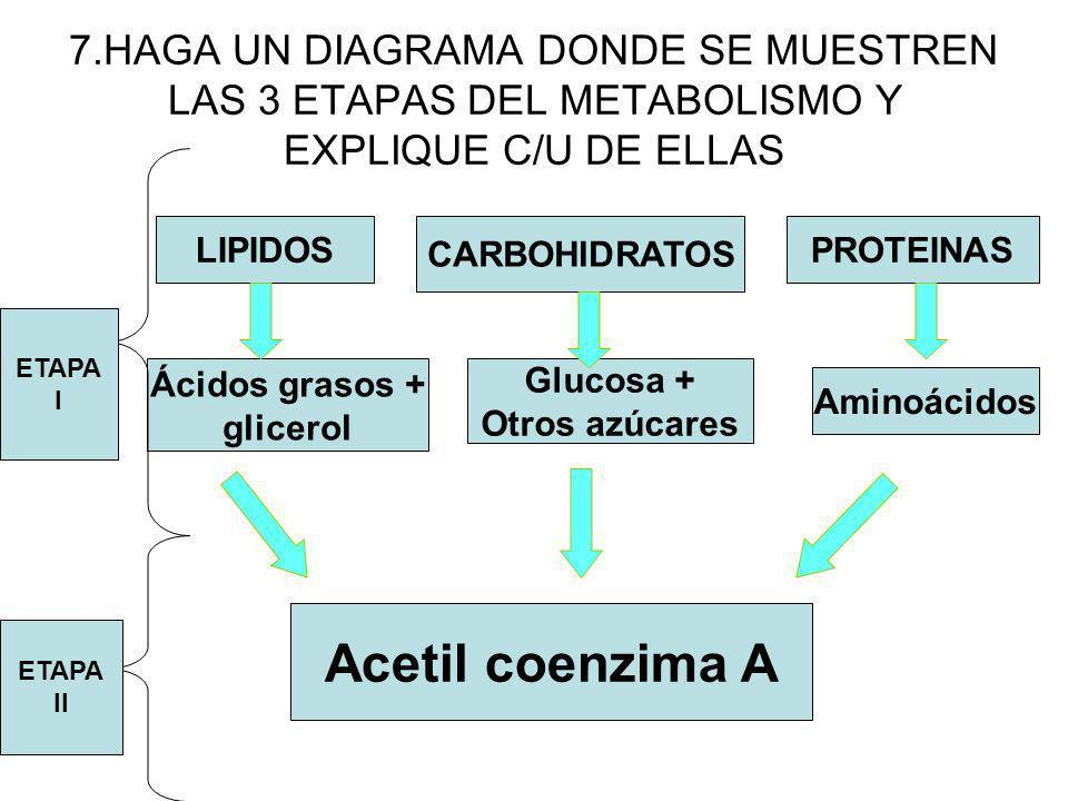 7.HAGA UN DIAGRAMA DONDE SE MUESTREN LAS 3 ETAPAS DEL METABOLISMO Y EXPLIQUE C/U DE ELLAS LIPIDOS CARBOHIDRATOS PROTEINAS Aminoácidos Glucosa + Otros