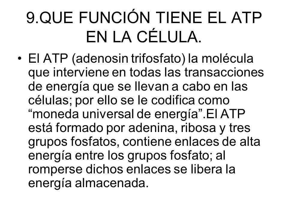 9.QUE FUNCIÓN TIENE EL ATP EN LA CÉLULA. El ATP (adenosin trifosfato) la molécula que interviene en todas las transacciones de energía que se llevan a